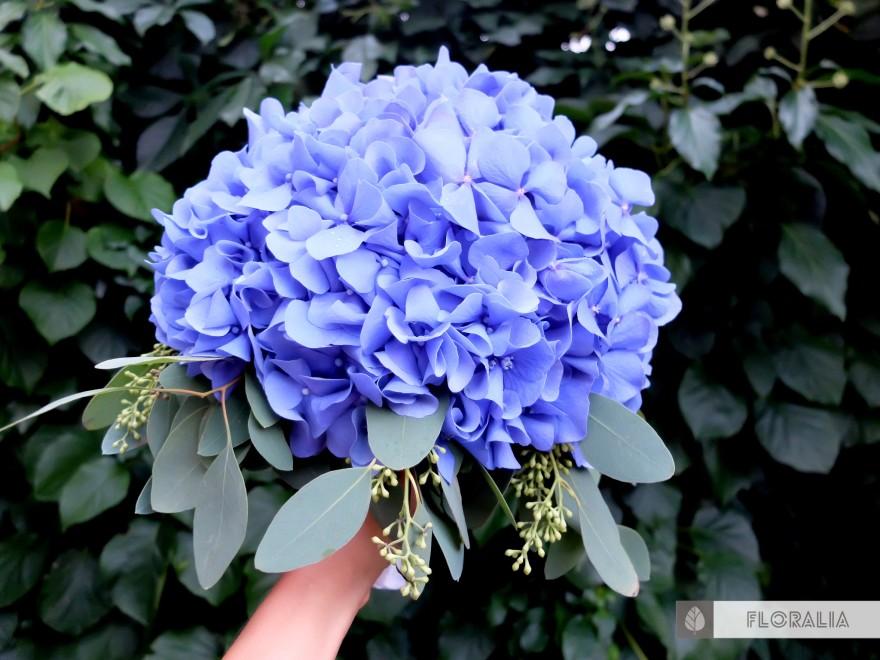Dekoracje z hortensją w kolorze ciemnoniebieskim FLORALIA 03